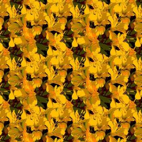 Blossom Photographic Alstroemeria Spill