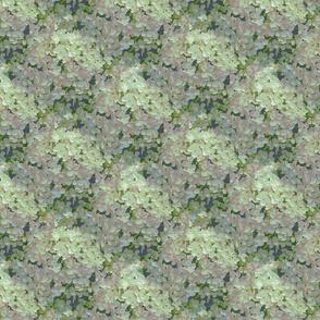 Blossom Photographic Hydrangea Blissful