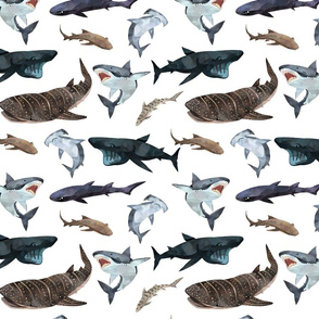 Nutical sharks