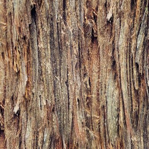 Tree Bark (Seamless)