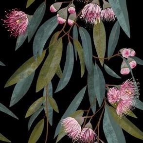 Australian Pink Eucalyptus on black