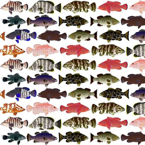12 Groupers (two line)
