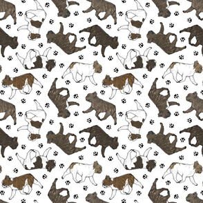 Trotting brindle French Bulldogs and paw prints - white