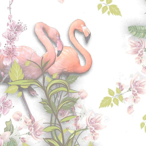 Flamingos with a white background