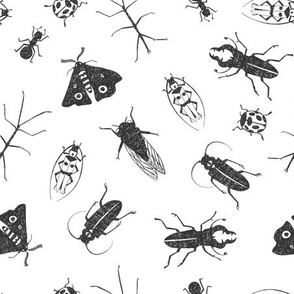 Black and White Insects