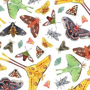 Moths watercolor