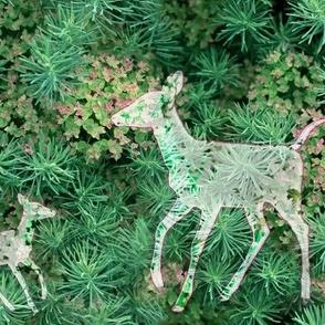 Graceful Deer Walking Softly