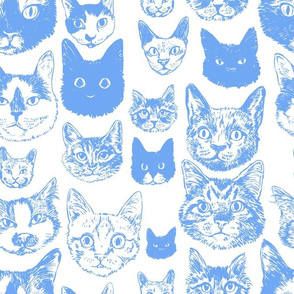 cats - periwinkle