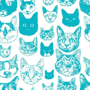cats - teal