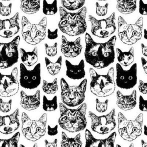 cats - smaller black + white