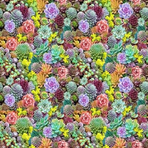 quilt square succulents kaleidoscope colors