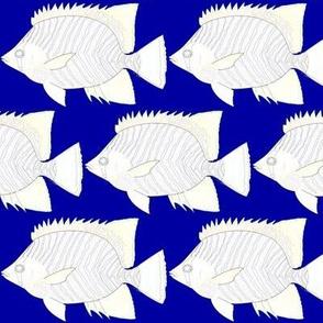 Chevron ButterflyFish lines on blue