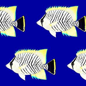 Chevron Butterflyfish on navy blue