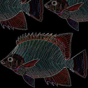 Chevron Butterflyfish lines on black