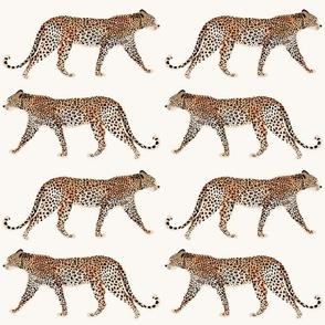 Cheetah Park II_Iveta abolina