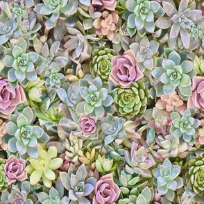 quilt square succulents pastel