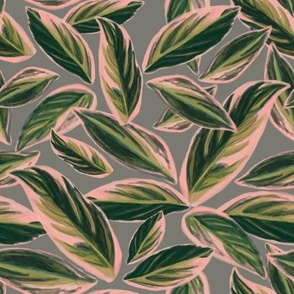 Calathea Triostar Leaves