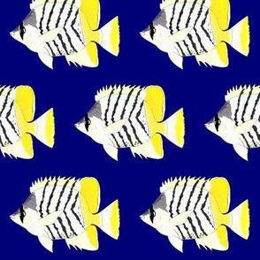 Atol lButterflyFish on dark blue