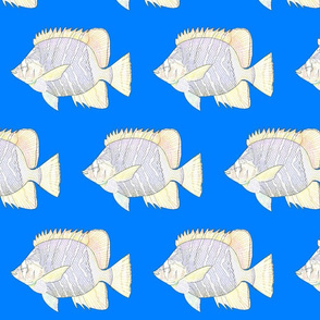 Atoll Butterfly fish lines on sea blue