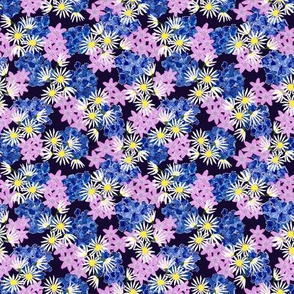 Asters with Pink and Blue Flowers on Black