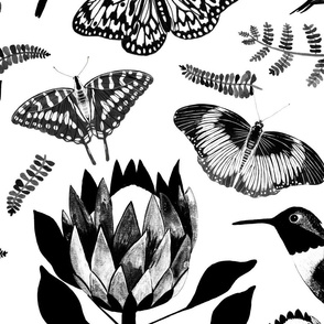 Protea butterflies BW  - Large