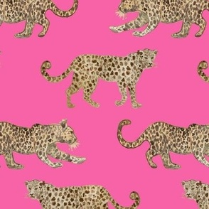 Leopard Parade hot pink
