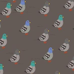 Pigeons of NYC
