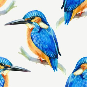 Watercolor kingfisher