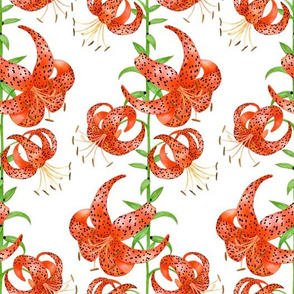 Tiger Lilies (White Background)