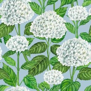 White hydrangea on blue, watercolor