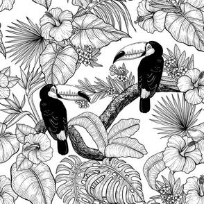 Toucan garden toile