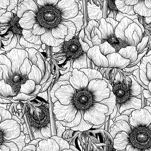 Anemone garden in black and white