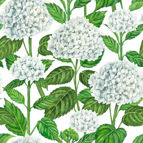 White hydrangea watercolor 2