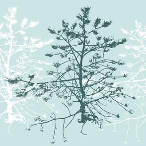 Little pinetree in mint