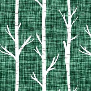 blue pine linen birch trees