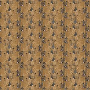 Silky Terrier portrait pack