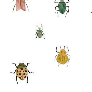 Summer beetles