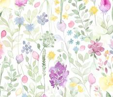Midsummer watercolor wild flowers