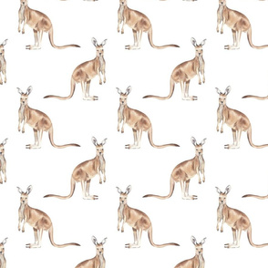 Kangaroo Pattern White