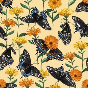 Black Swallowtails & Calendulas Yellow