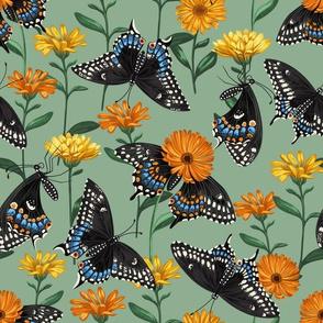 Black Swallowtail Butterfly & Marigolds Dark