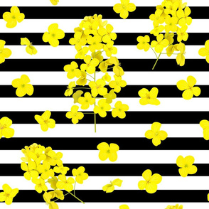 canola pattern with lines11