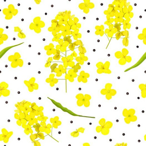 canola pattern with seeds