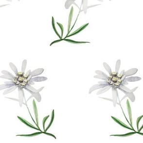 edelweiss-flower-watercolor-pattern-2