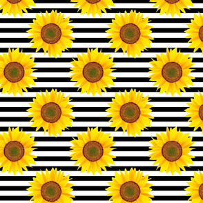 sunflowers on black lines patten