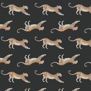 African Leopard Dark