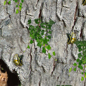 Squirrels on bark with greenery_butterflies and birds