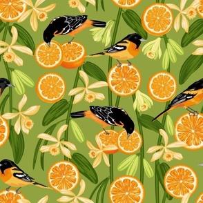 Birds & Oranges Green Background