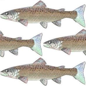 Atlantic Salmon as line art