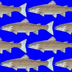 Atlantic Salmon line art on dark blue